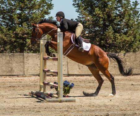 Petaluma, Calif / July 29, 2012: Woman jumps horse in steeplechase race