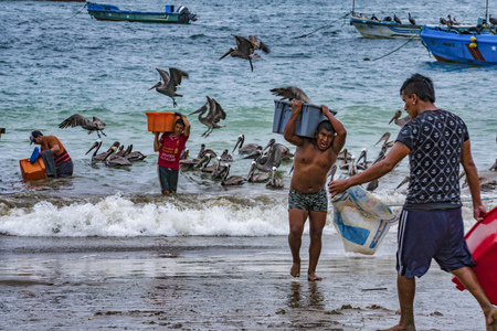 Puerto Lopez, Ecuador - September 12, 2018 - man carried bin of fresh fish from boat to waiting ice truck wholesale Editorial