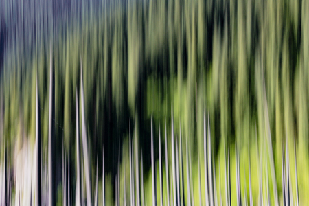 Abstract background of empty trees blurred vertically Reklamní fotografie