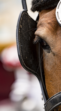 Close-up of eye of a horse wearing blinders