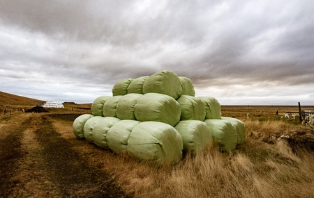 Bales of hay bundled to protect from weather, and ready for transport to barn Stock Photo