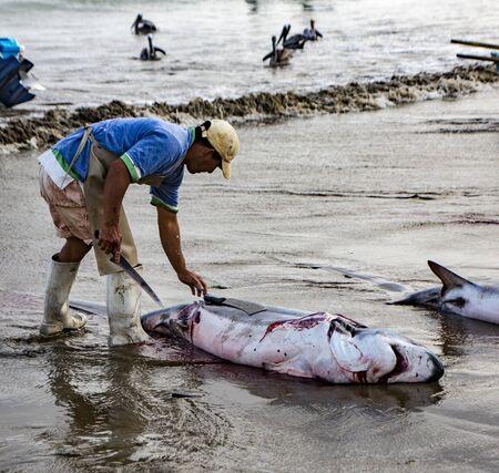 Puerto Lopez, Ecuador - Aug 19, 2016: Man cuts the fins off a dead shark, as part of processing the fish for human consumption in Puerto Lopez, Ecuador Editorial
