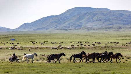 Issy Kul,  Kazakastan - June 1, 2017 - Rancher rounds up horses while riding a motocycle