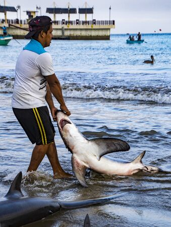 Puerto Lopez, Ecuador - Aug 19, 2016: Fisherman drags a dead shark onto the beach for processing in Puerto Lopez, Ecuador Editorial