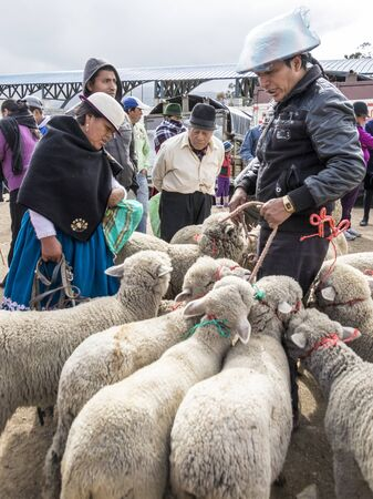 Canar, Ecuador - July 12, 2015 - Sheep are tied into circles at the Saturday animal market for sale