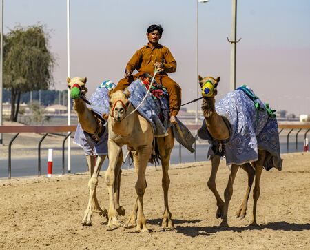 Dubai, UAE, Mar 21, 2018 - Man is cooling down his camels after training them to race Archivio Fotografico - 136265283