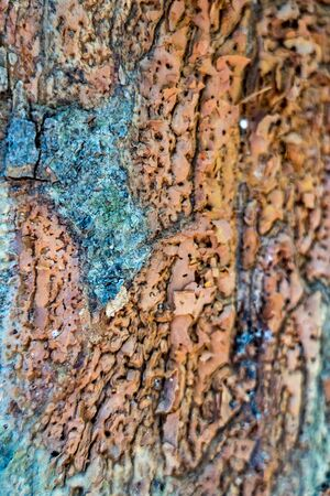 Background texture of the bark of a tree. Standard-Bild - 128584227