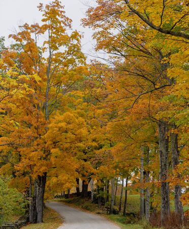 Road winds through trees in full Fall color in Vermont Standard-Bild - 128584528