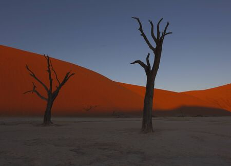 Dead camelthorn trees sitting in a salt pan in Deadvlie in Namibia Imagens