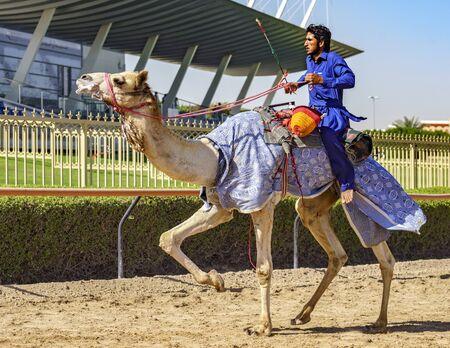 Dubai, UAE, Mar 21, 2018 - Man runs camel during training for races