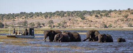 Chobe, Botswana - July 22, 2018: Elephants cross the river, as a boat of tourists watch in Botswana Editoriali