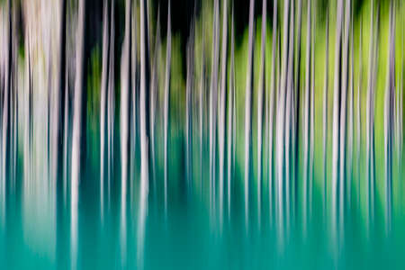 Abstract background of empty trees blurred vertically Stock fotó