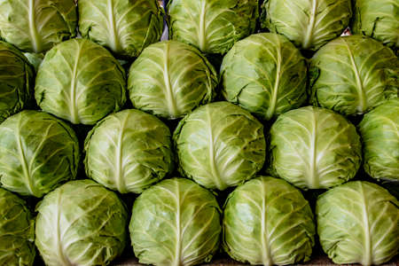 Rows of lettuce for sale at market Stock fotó