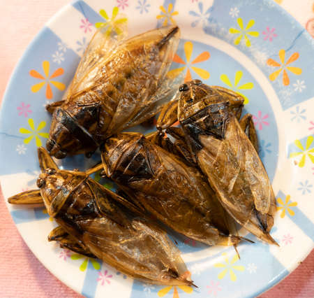 Fried Cockroaches on a Plate Being Sold as an Exotic Snack.