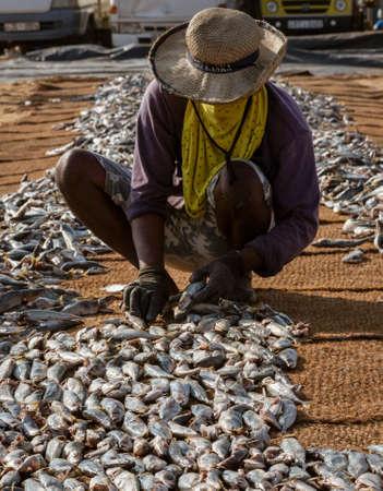 ED-Negombo, Sri Lanka - 2019-03-22 - Fish drying beach at Negombo Sri Lanka.
