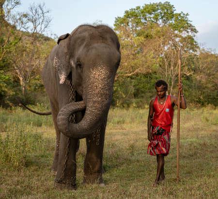 Negombo, Sri Lanka - 2019-03-22 - Elephant Walks With His Handler Across Grass Field. Redactioneel