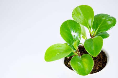 close up green plant