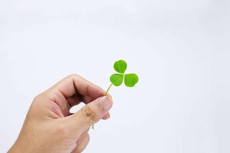hand hold lucky clover Stock Photo - 15442939