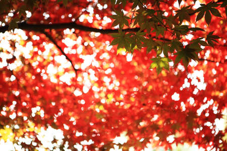 colored leaves In the park  Stock Photo