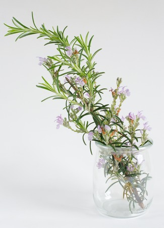 Branch of rosemary bloomed in glass jar on white background.