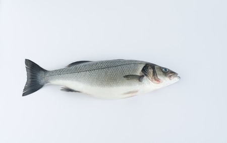 Sea bass on white background. Top view. Stock Photo