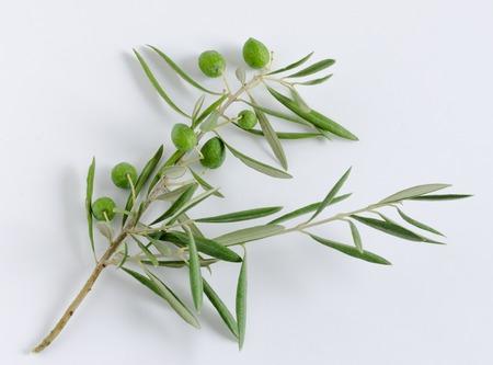 Olivenzweig mit Oliven auf weißem Hintergrund.