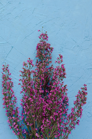 Bouquet of purple heather flowers on blue background. Top view.
