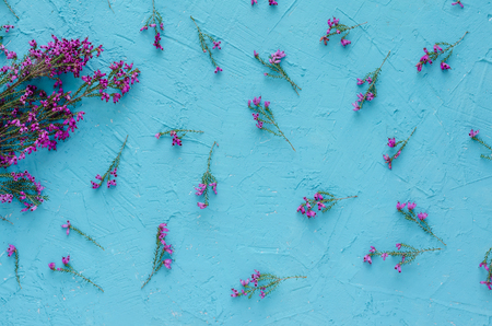 Purple flowers of heather on blue background. Flat lay. Top view. Graphic resources.