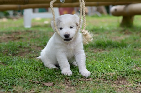 Young white dog sitting in a park. Furry white puppy.