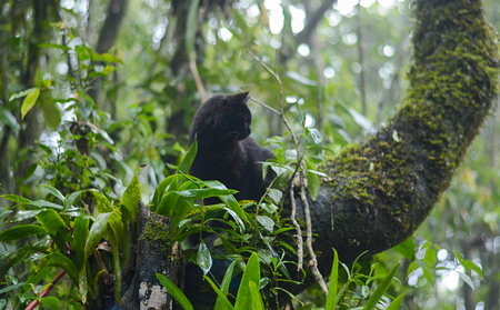 Black cat climbed on tree in the forest surrounded by wild vegetation. Tropical climate. Stock Photo