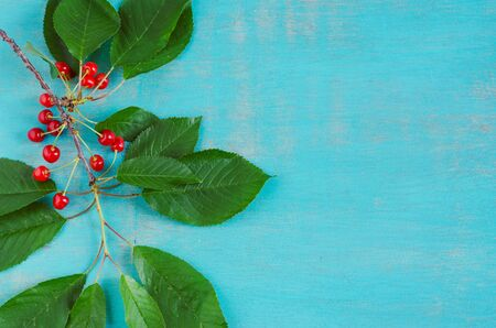 Cherry branch with ripe fruits on blue background. Copy space.