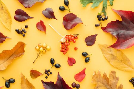 Composition of autumn leaves on yellow background. Imagens