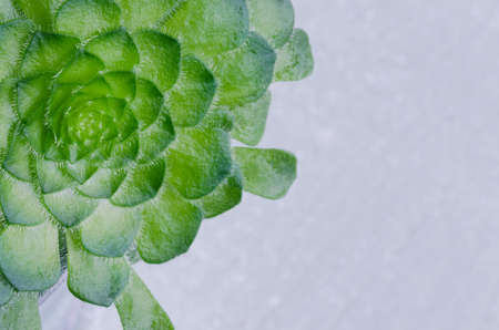 Succulent plant on green background with space for copying. Imagens