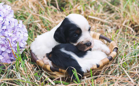 Two tender puppies in a basket with a grassy bottom. Copy space. Imagens