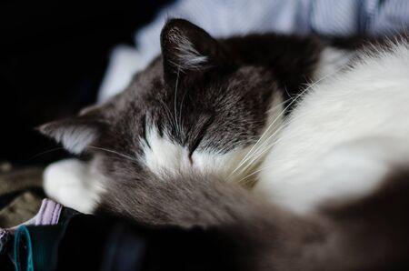 cat sleeping inside the wardrobe Zdjęcie Seryjne