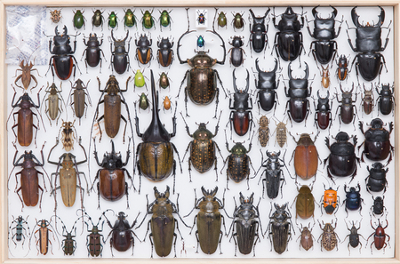 coleoptera: Insect specimens