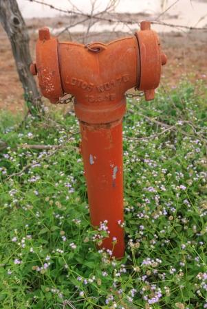 hydrant photo