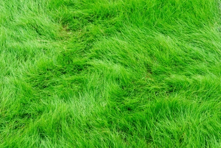 Green grass Stock Photo - 17307195