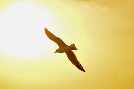 An image of a beautiful seagull in the bright sky  photo