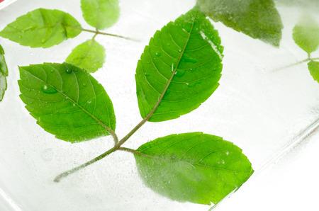 Leaf frozen in ice