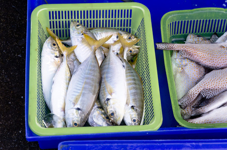 fish vendor: An assortment of pretty and extremely fresh fish at a fishmonger