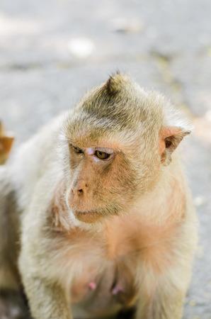 Baby monkeys are curious,Chonburi, Thailand   photo