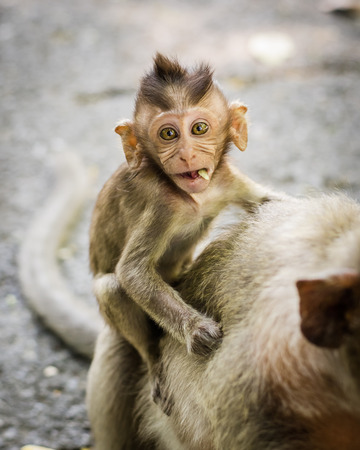 Baby monkeys are curious,Chonburi, Thailand   photo
