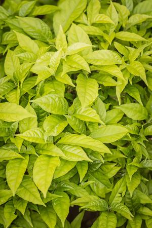 tiny: Tiny green leaves background.