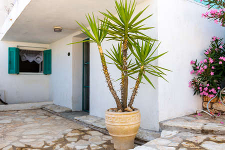 Facade of a old Greek village house with white washed wall and decorated with potted plant and flowers.
