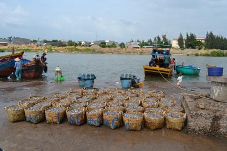 qui: Morning harvest of fish, Qui Nhon, Vietnam Editorial