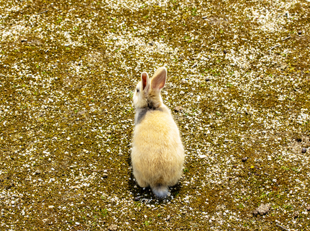 The back view of a little brown and white rabbit in the ground.