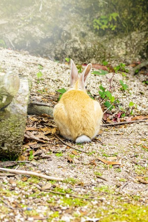 The back view of a brown and white rabbit in the ground.