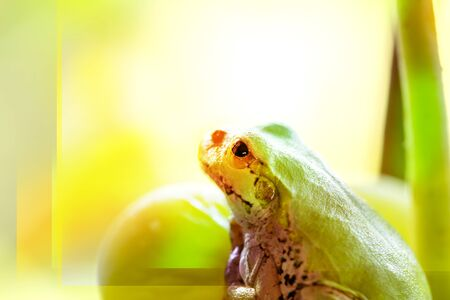 A frog on a grape. The frog looks towards light on colorful color background.close up.