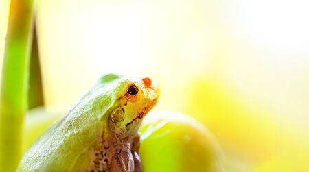 A frog to ride on a grape. The frog looks towards light on colorful color background.close up.